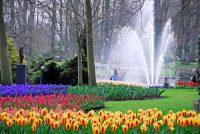 4 Tage Holland Blumencorso